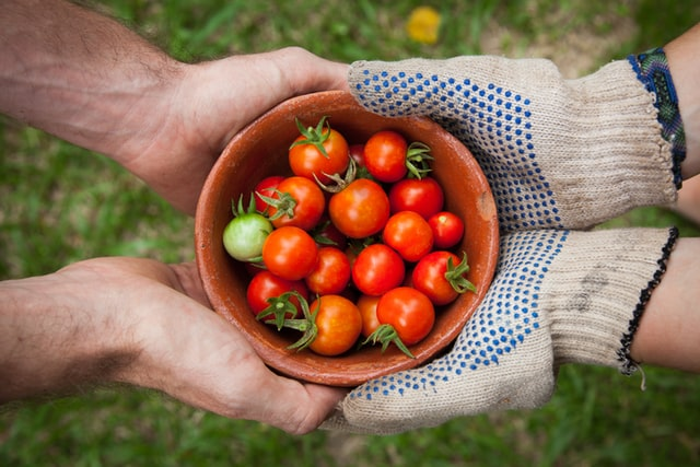hands holding bowl of tomatos